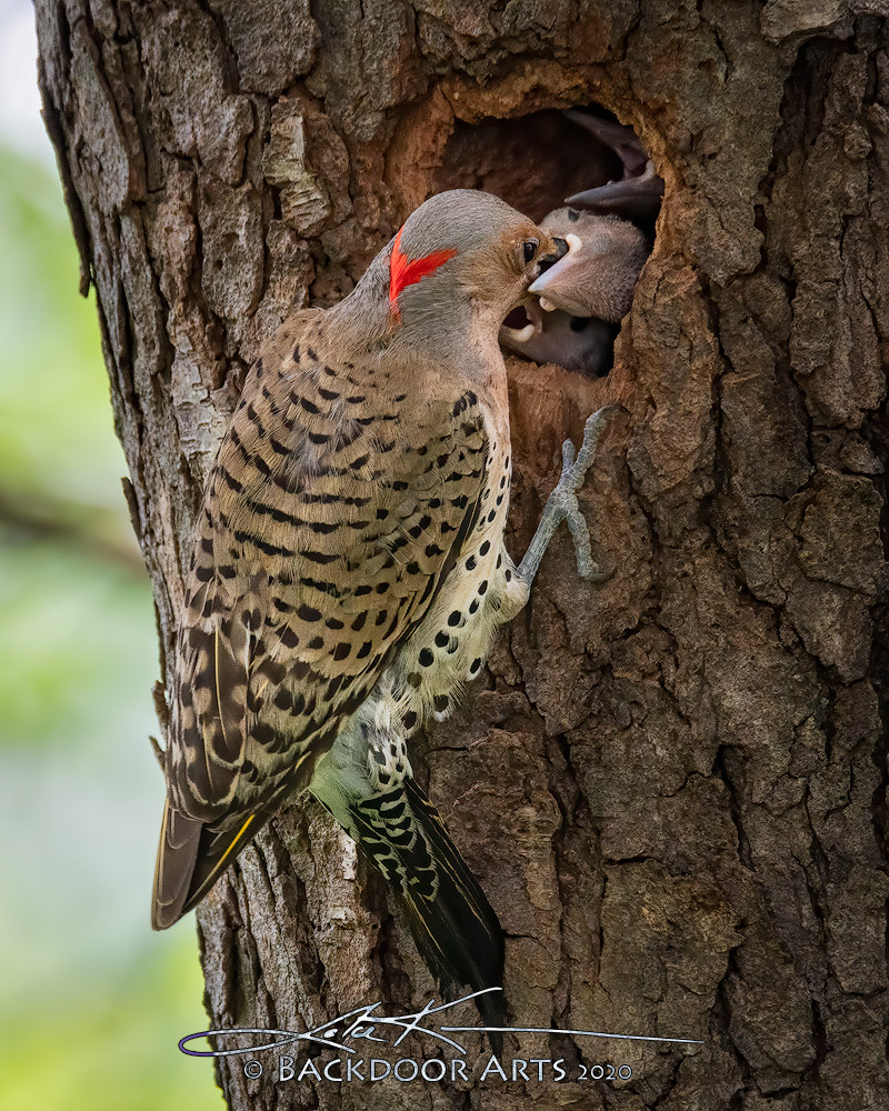 Backdoor Flicker Family-d51_4396-edit-copy.jpg