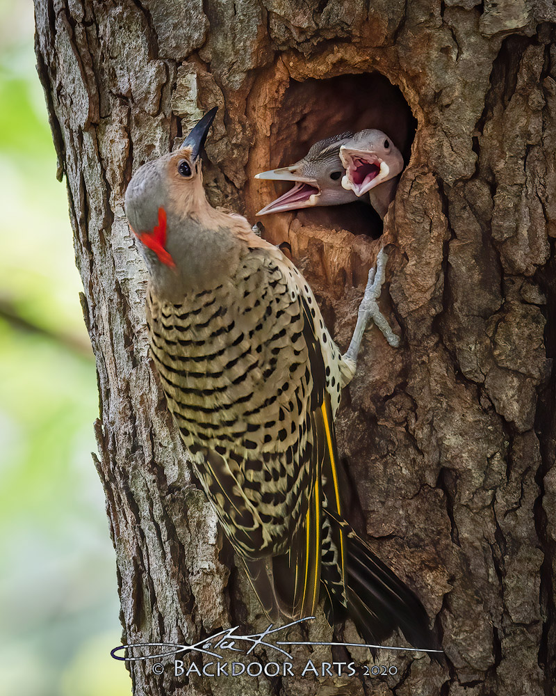 Backdoor Flicker Family-d51_3876-edit-copy.jpg