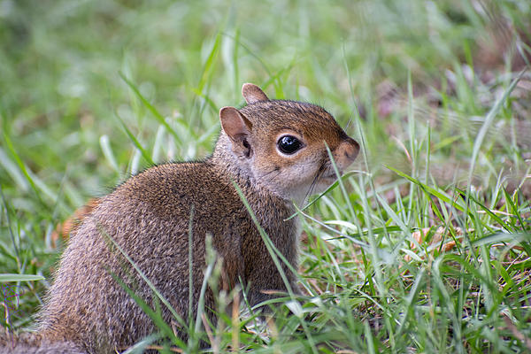 Post your Squirrel pictures-baby.jpg