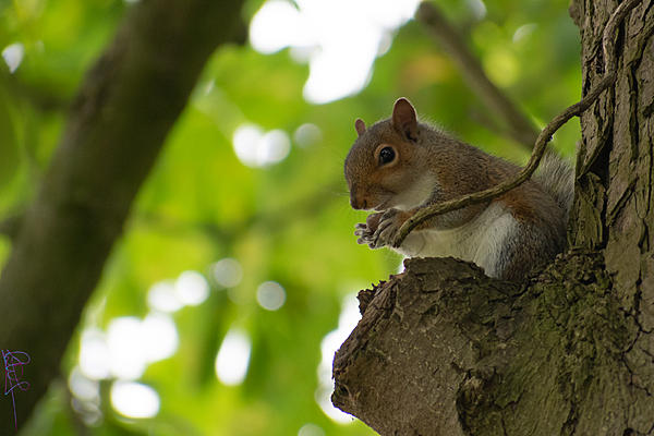 Post your Squirrel pictures-sq3.jpg