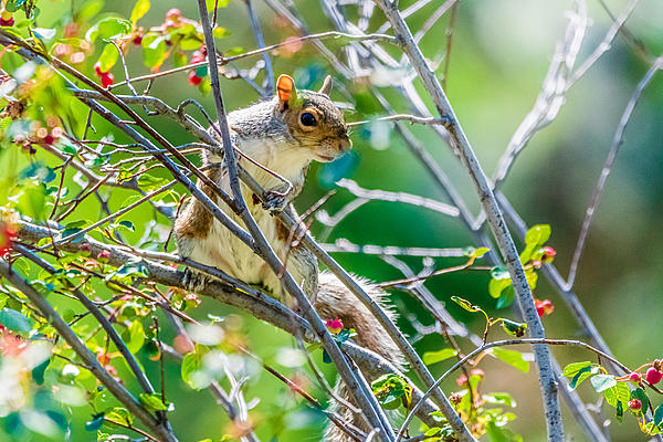 Post your Squirrel pictures-d75_0313.jpg