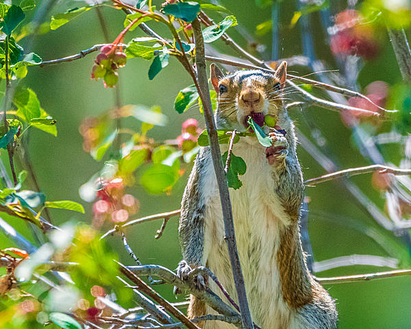 Post your Squirrel pictures-d75_0315.jpg