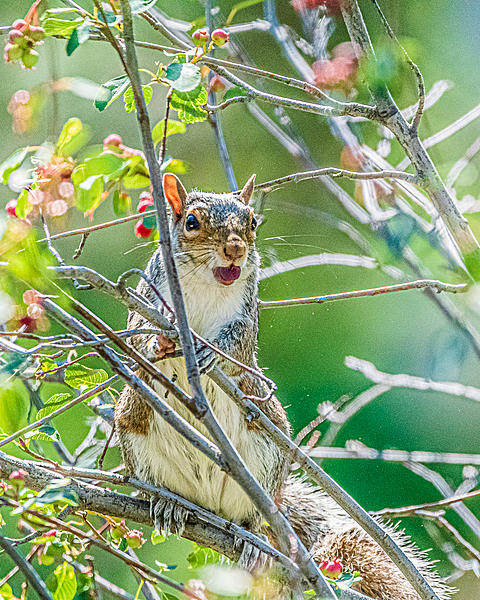 Post your Squirrel pictures-d75_0316.jpg
