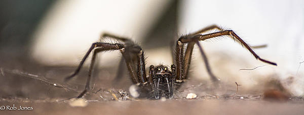 Post your spiders-spider-1.jpg