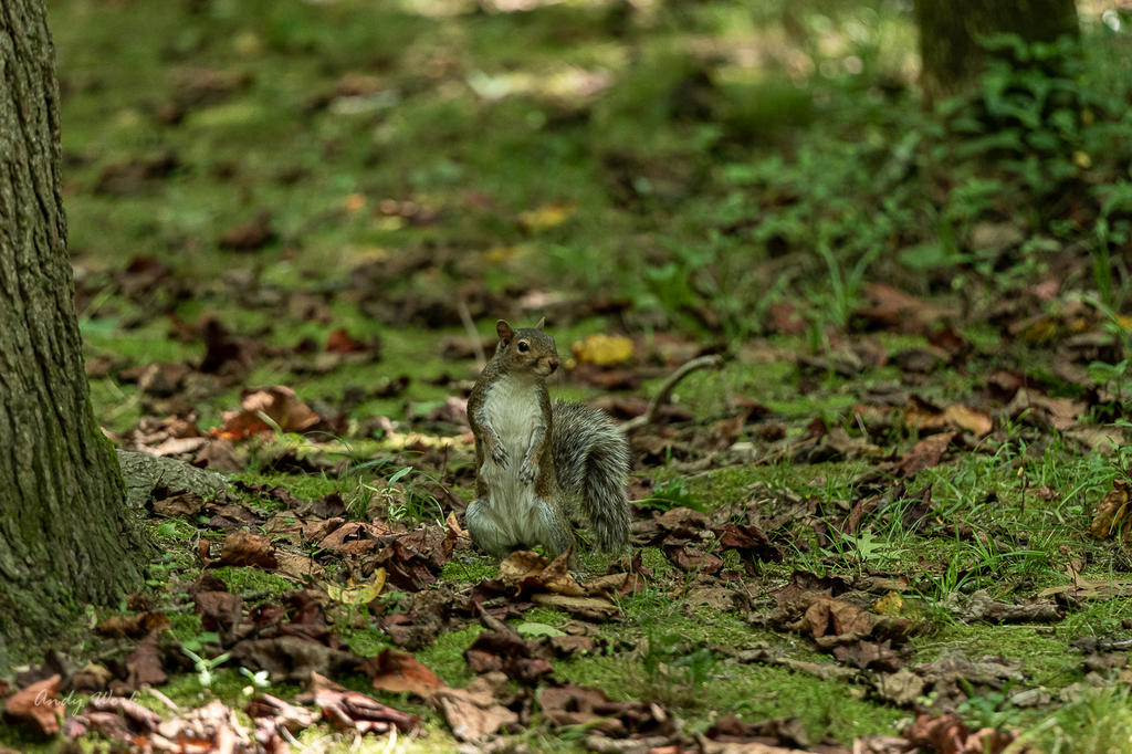 Post your Squirrel pictures-lake-cumberland-7-25-2020-508265.jpg