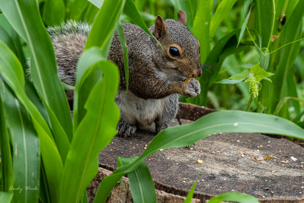 Post your Squirrel pictures-untitled-1126.jpg