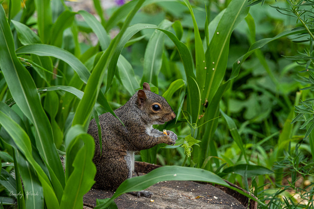 Post your Squirrel pictures-untitled-1124.jpg