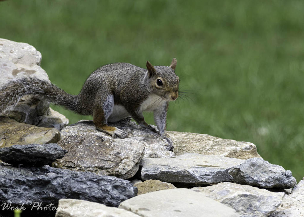 Post your Squirrel pictures-20200802-rd5_0681.jpg