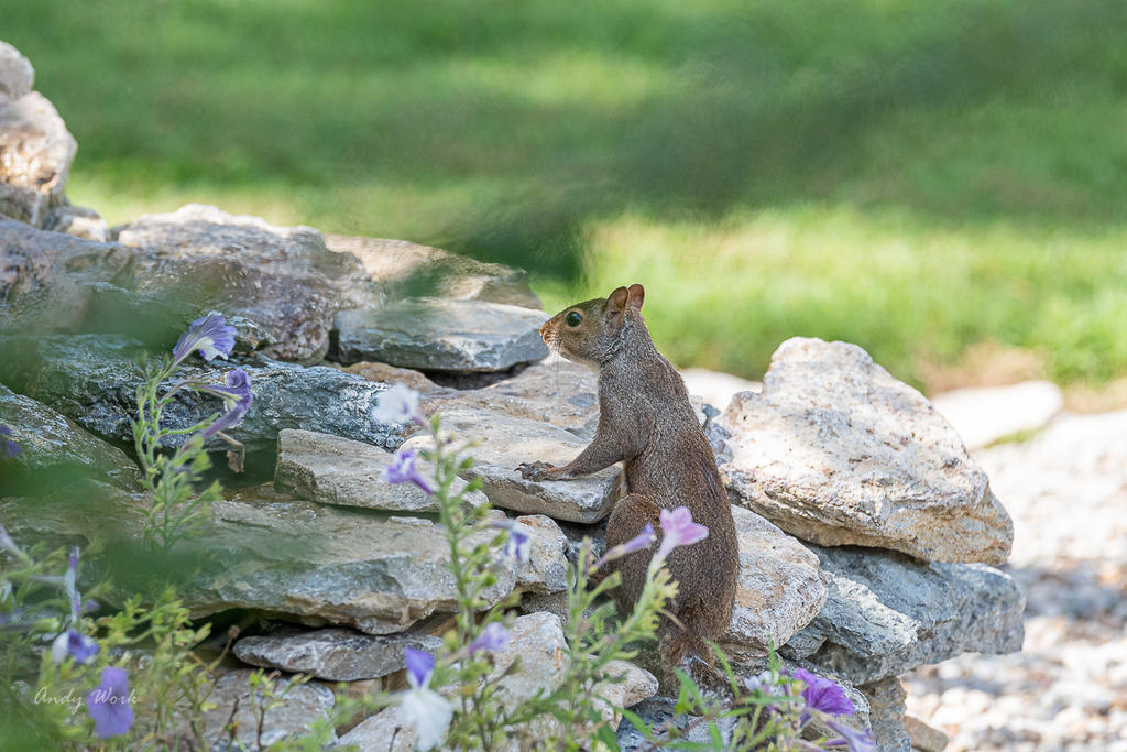 Post your Squirrel pictures-untitled-509453.jpg