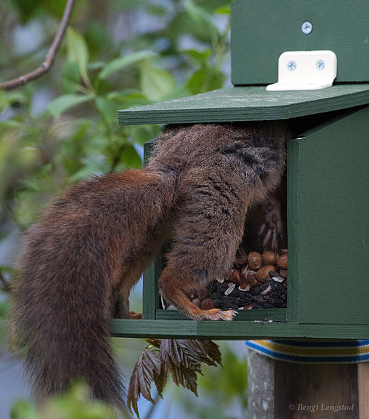 Post your Squirrel pictures-d810-0091.jpg