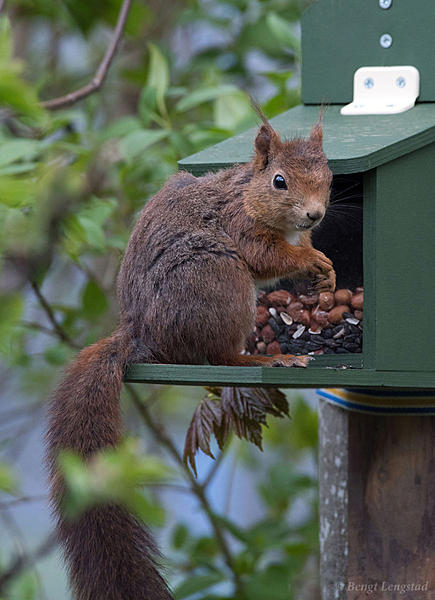 Post your Squirrel pictures-d810-0104.jpg