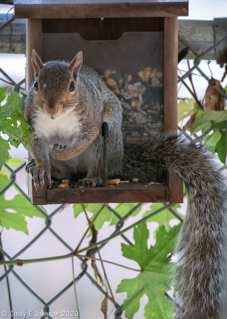 Post your Squirrel pictures-_dsc1708-low-res.jpg