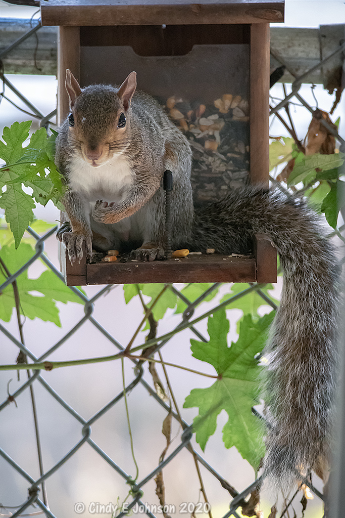 Post your Squirrel pictures-_dsc1708-low-res-copy.jpg