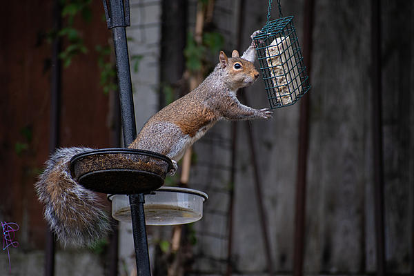 Post your Squirrel pictures-rumbled.jpg