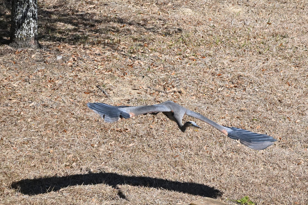 Post your Birds in Flight-z50_0059_05_cr_sm.jpg