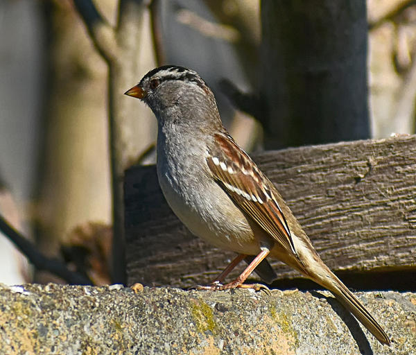 Post your birds (2)-2021-01-16-13.23.51-nik-crop-s.jpg