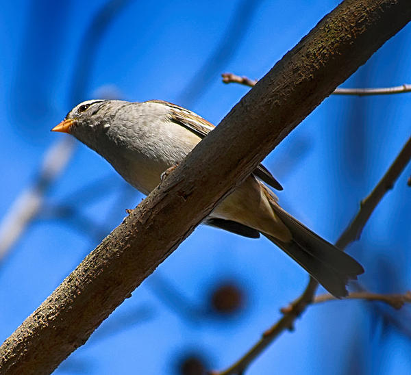 Post your birds (2)-2021-01-09-11.52.21-2-nik-crop-s.jpg