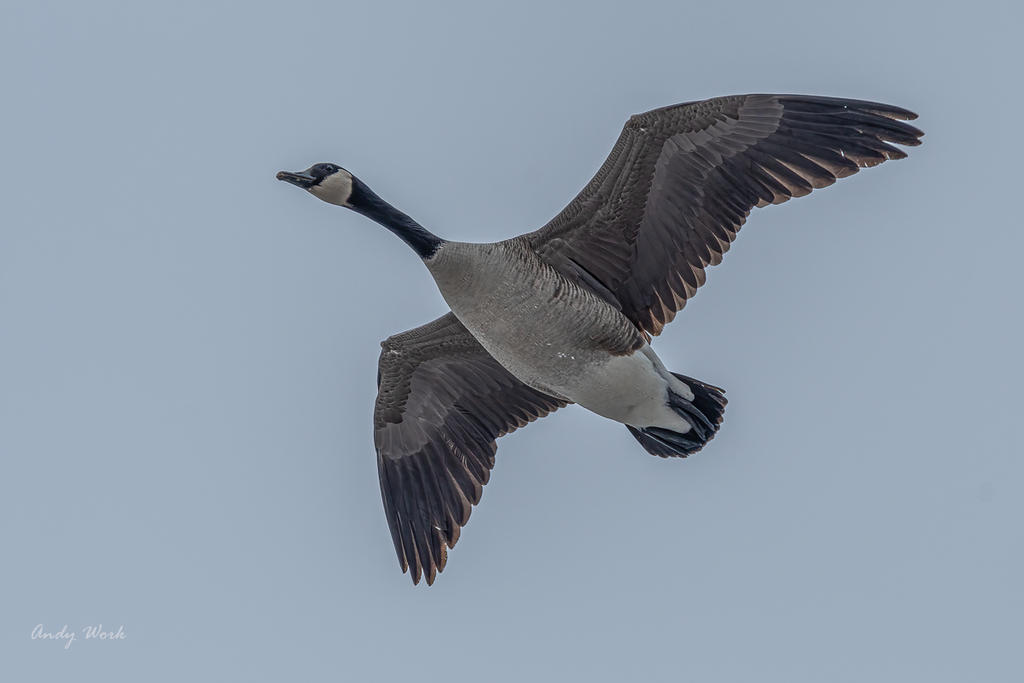 Post your Birds in Flight-untitled-501171-edit-edit.jpg