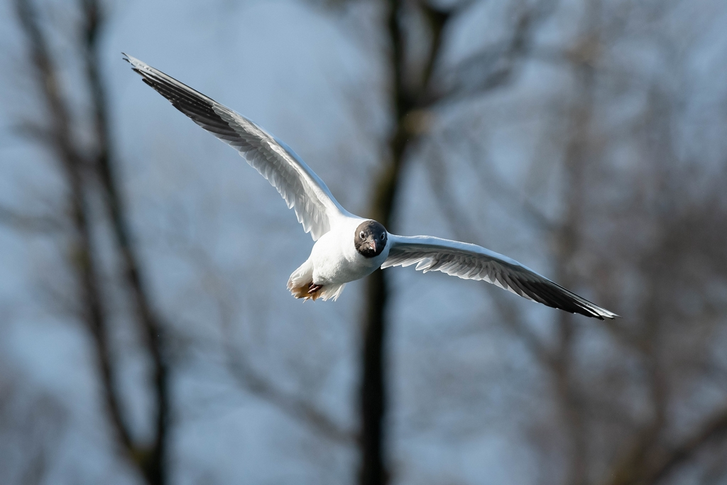 Post your Birds in Flight-bif10.jpg