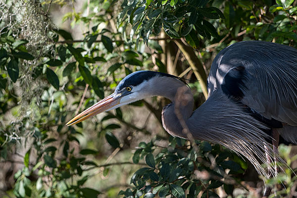 Whiskeyman's March 2021 Wildlife Photo Chase-gbh-hunting-cover-2.jpg