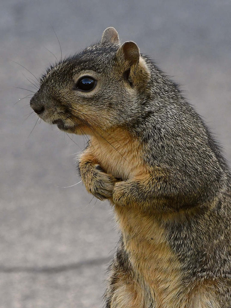 Post your Squirrel pictures-squirrel8.jpg