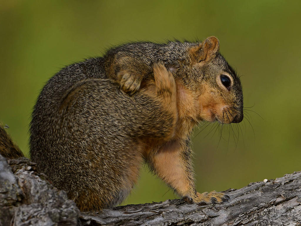 Post your Squirrel pictures-squirrel5.jpg