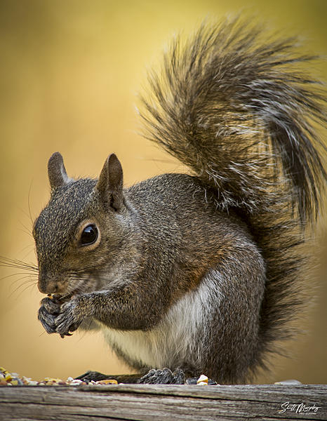 Post your Squirrel pictures-stm_0003.jpg