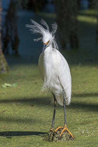Post your birds (2)-bad-feather-day-1.jpg