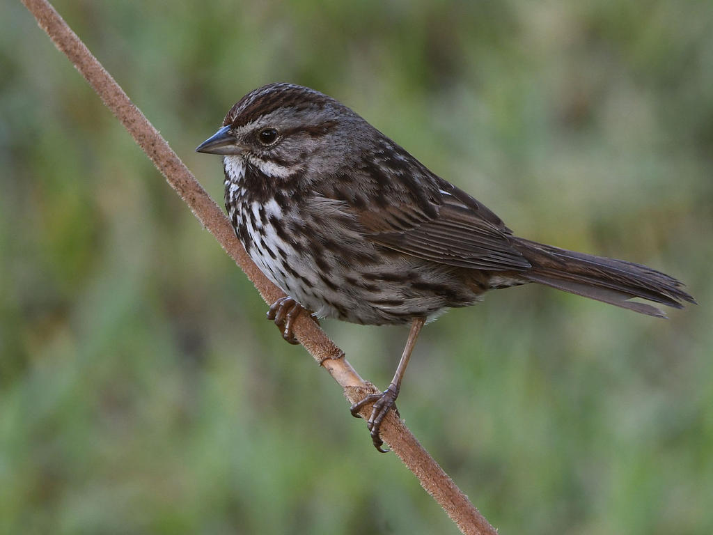 Post your birds (2)-sparrow3.jpg
