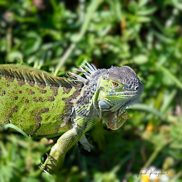 Let's see some reptiles...-lizard-1.jpg