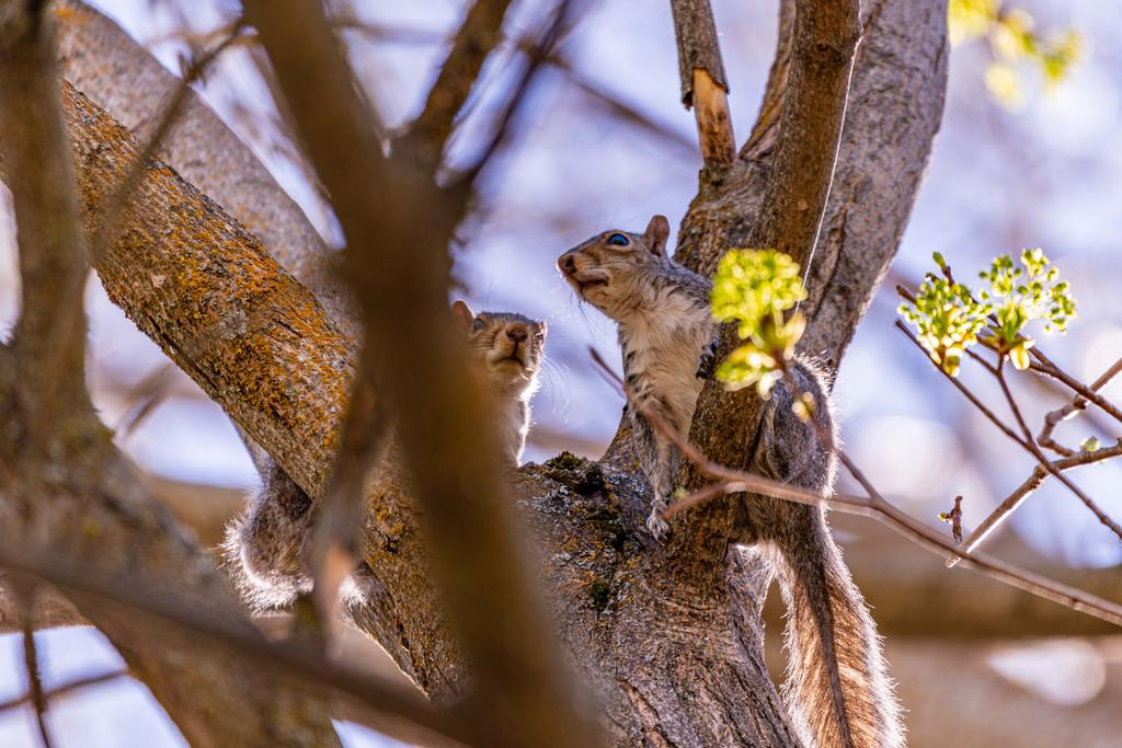 Post your Squirrel pictures-800_0019.jpg