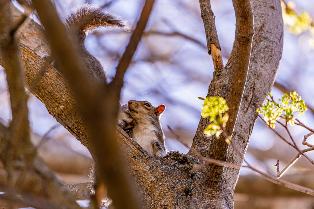Post your Squirrel pictures-800_0022.jpg