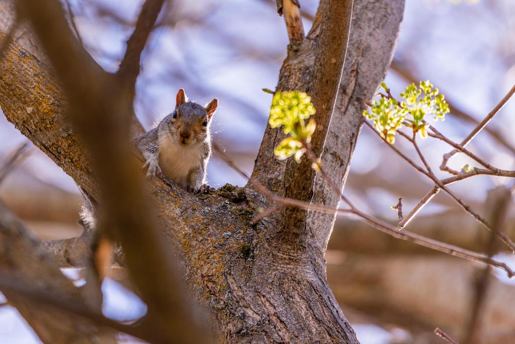 Post your Squirrel pictures-800_0026.jpg