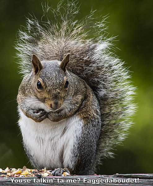 Post your Squirrel pictures-stm_0033.jpg