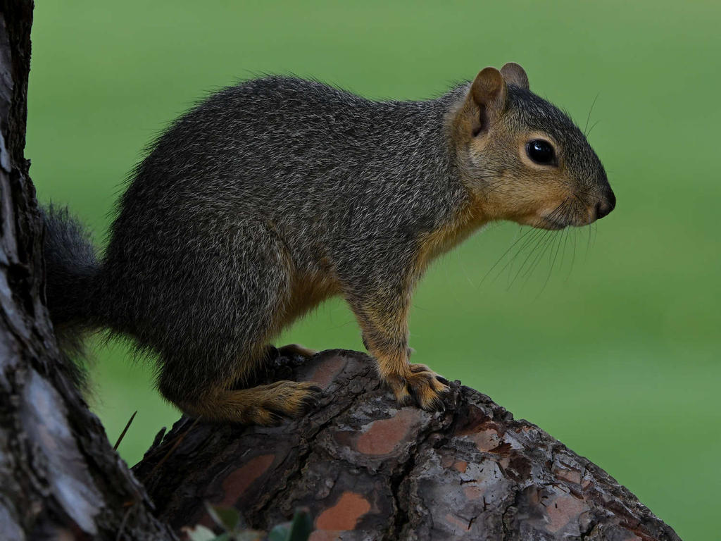 Post your Squirrel pictures-squirrel9.jpg