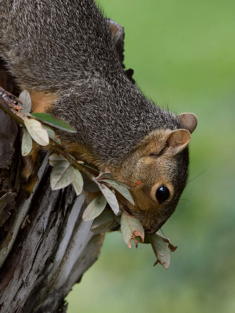 Post your Squirrel pictures-squirrel10.jpg