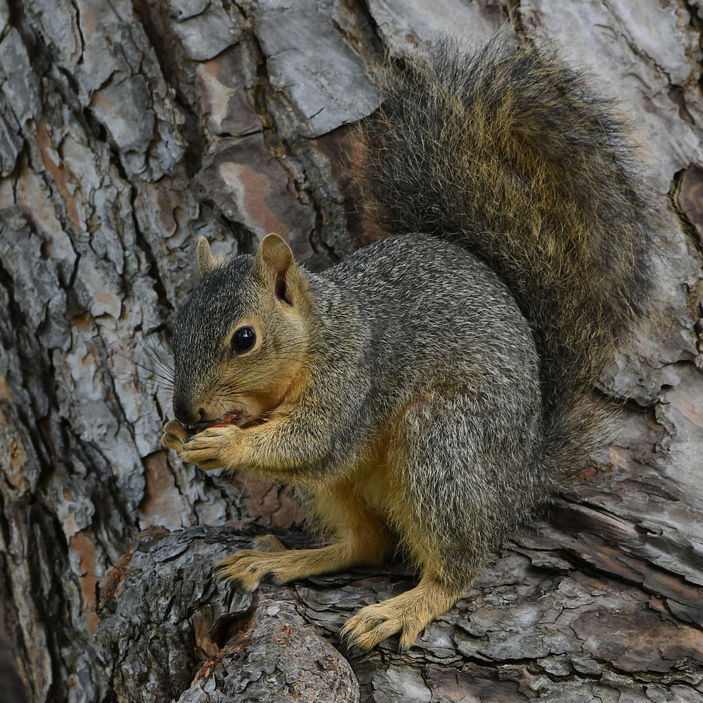 Post your Squirrel pictures-squirrel15.jpg
