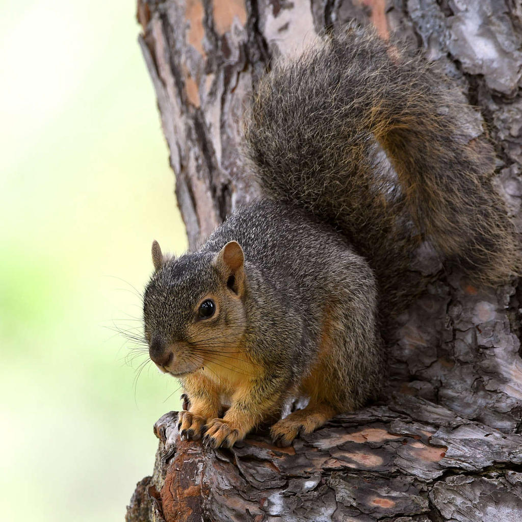 Post your Squirrel pictures-squirrel19.jpg