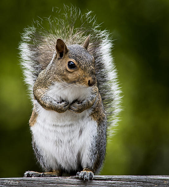 Post your Squirrel pictures-stm_0011.jpg