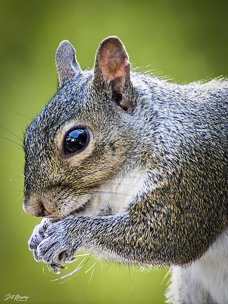 Post your Squirrel pictures-stm_0042.jpg