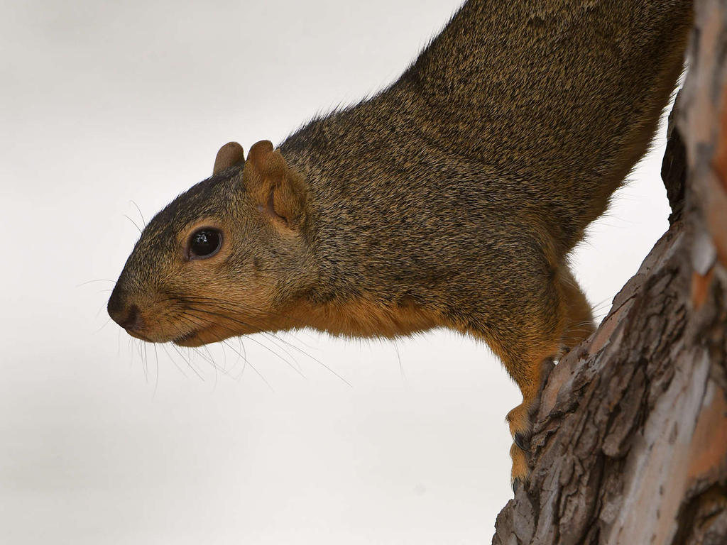 Post your Squirrel pictures-squirrel4.jpg