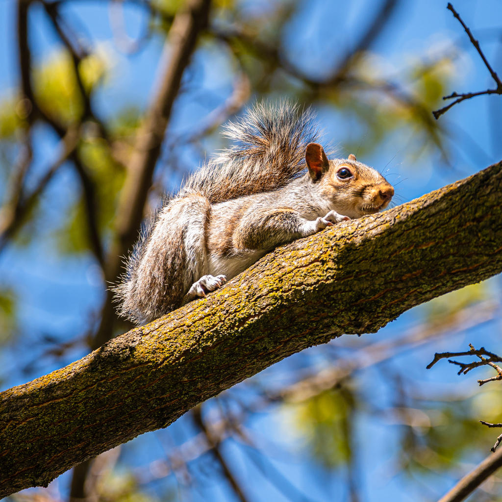 Post your Squirrel pictures-dsc_0011-1.jpg