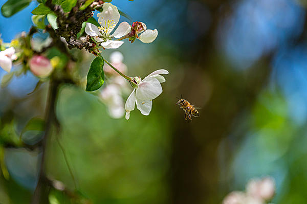 Post your dragonflies and bees/wasps-dsc_0388.jpg
