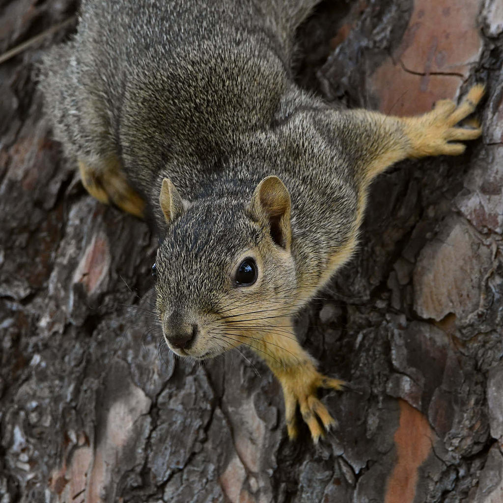 Post your Squirrel pictures-squirrel3.jpg