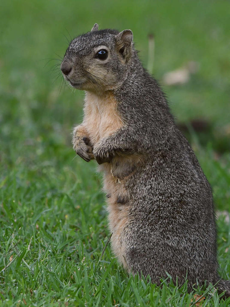 Post your Squirrel pictures-squirrel6.jpg