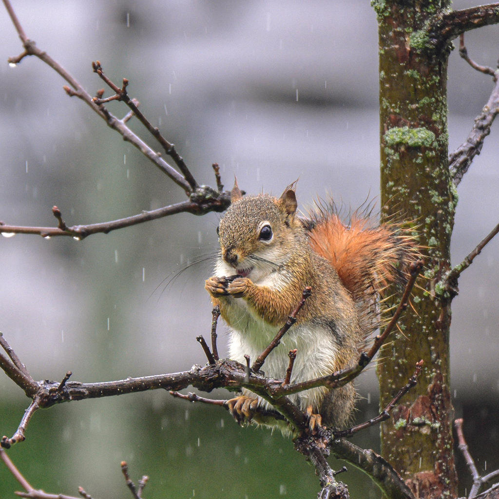 Post your Squirrel pictures-_d736980.jpg