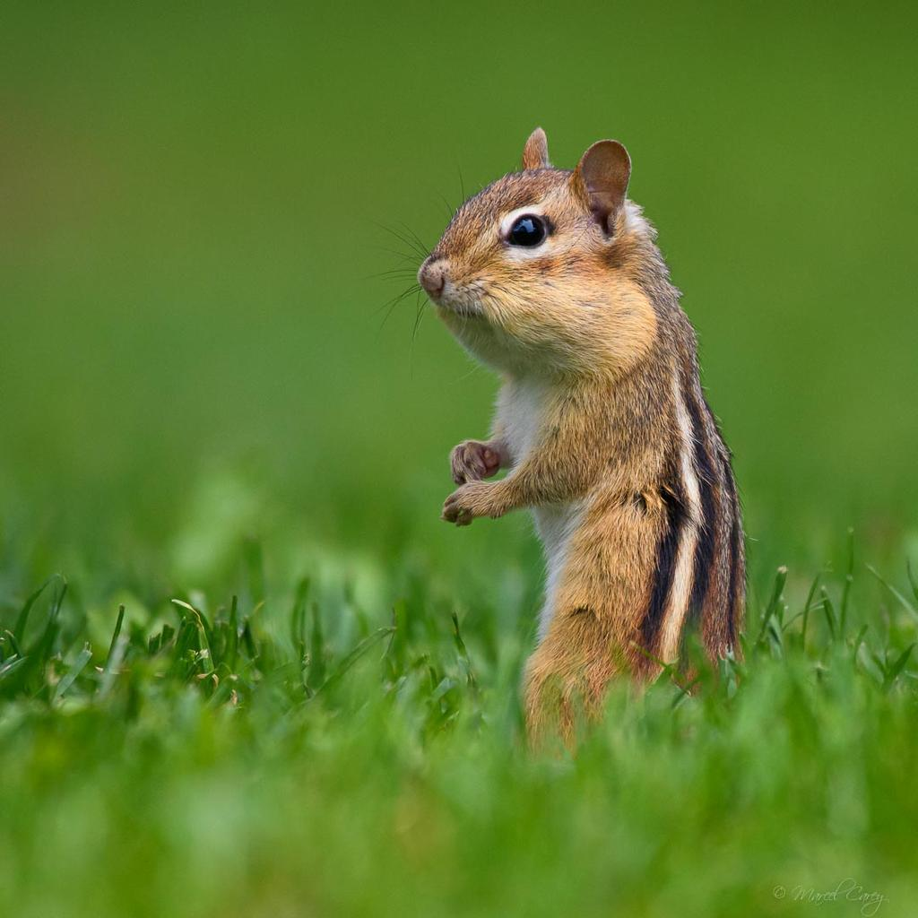 Post your Squirrel pictures-d5c_5108.jpg