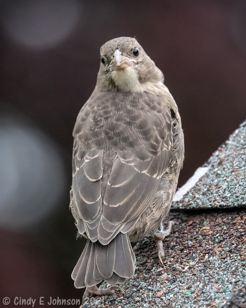 Can you help ID this bird please?-_5dx4569-low-res.jpg