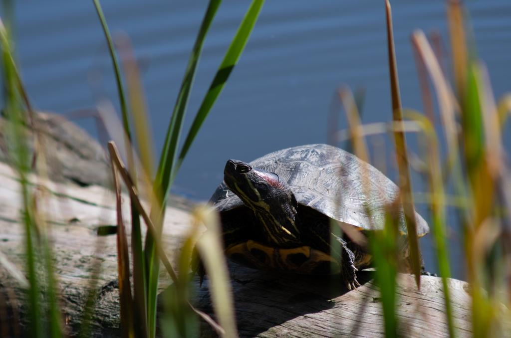 Post  your Frogs, Toads and Amphibians!-dsc_1381.jpg