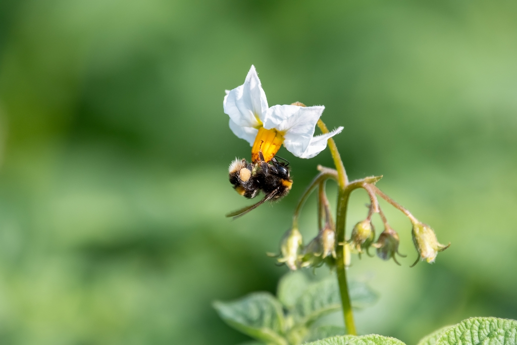 Post your dragonflies and bees/wasps-hanging-.jpg